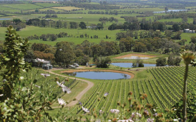 C31 – The Cellar Door – Yarra Yering & Sedona Estate