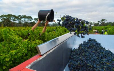 One-third of Australia's wineries could go under because of coronavirus pandemic, industry warns